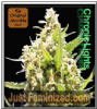 Original Sensible Chronic Lights Female 10 Seeds